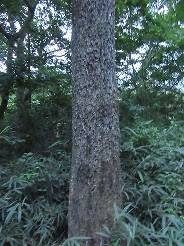 自然の森12