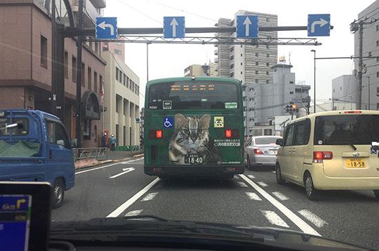 161025_1022yamaneko1.jpg