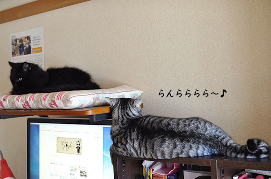 161104_luckin3_.jpg