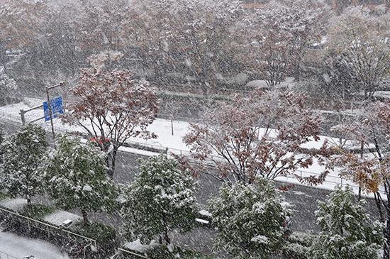 161124_yukikesiki.jpg