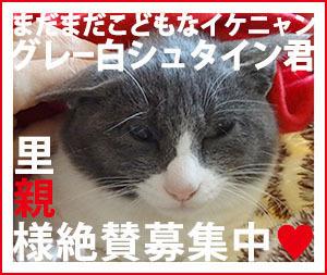 banner_boshu_shutaRL.jpg