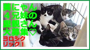 banner_lilymama300.jpg