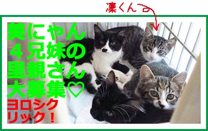 banner_lilymama420_Rin.jpg