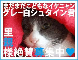 boshu_shuta_akazukin300.jpg
