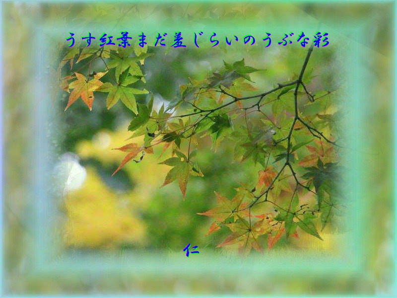 フォト575『 うす紅葉まだ羞じらいのうぶな彩 』rm1003