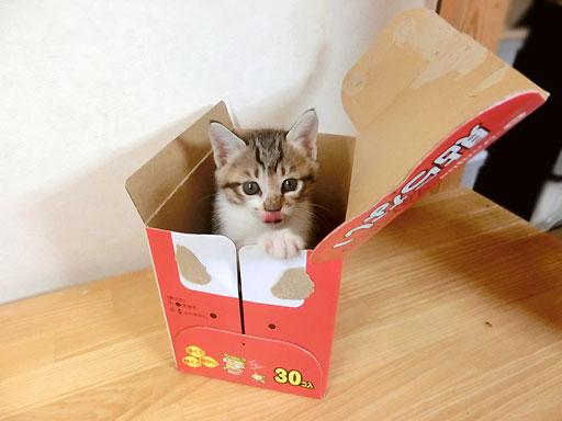 びっくり玉手箱?