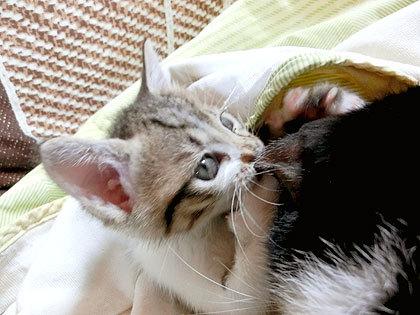 猫耳おいしい?