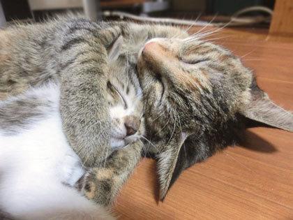 カイロを抱きしめる、ぽっちゃまん