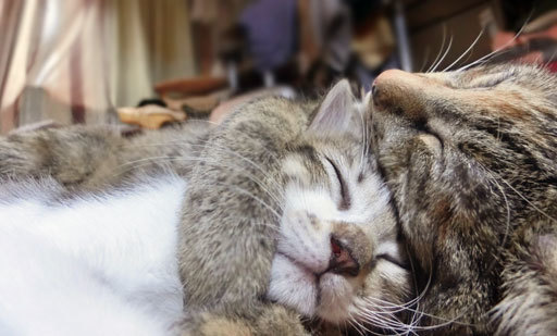 抱きしめられたりんのかわいいい~~ぃぃx寝顔ぉぉぉx