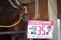 160929カウントダウン35インフォーマー&小坂智世厩務員