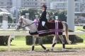 161103 誘導馬03 03レース誘導-01