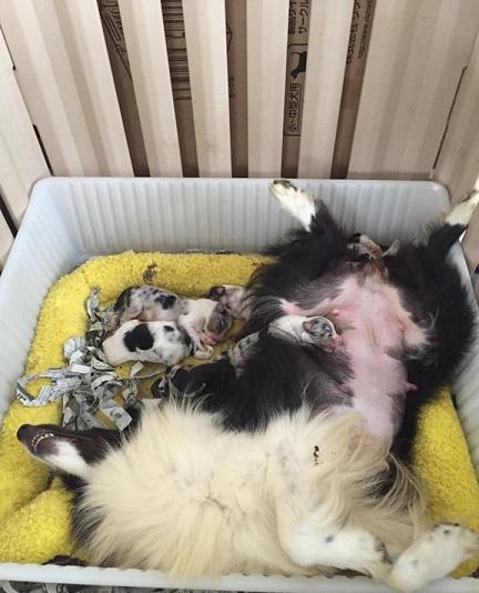 子犬生まれました!