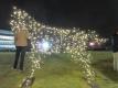 光の馬 ロジータ-2