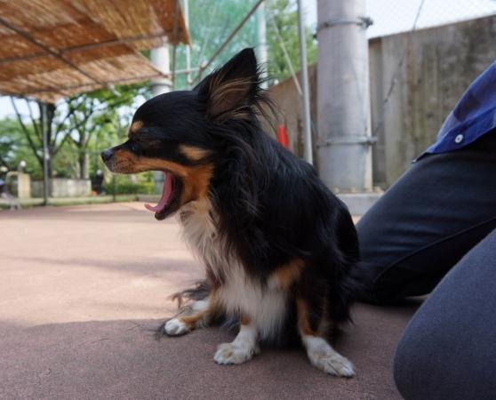 DSC01674駒沢
