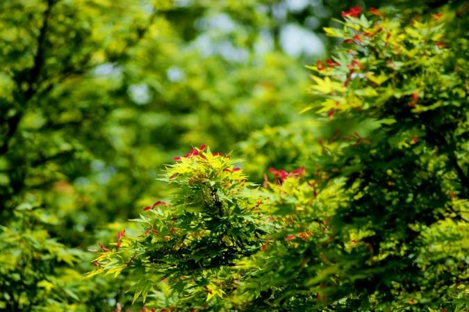DSC08202武蔵野の森