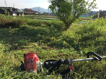 5172016草刈りS1