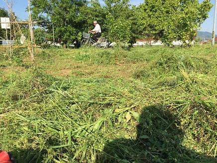 5172016草刈りS2