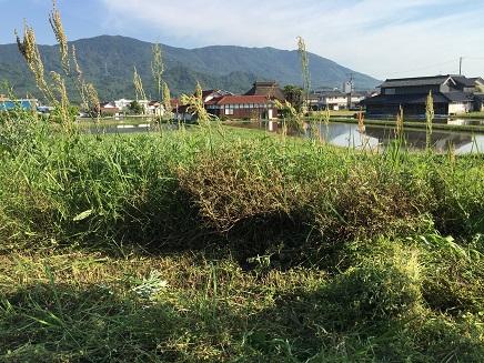 5172016草刈りS3