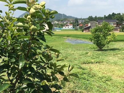 7202016 草刈りS4