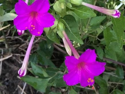 8282016 FlowersS2