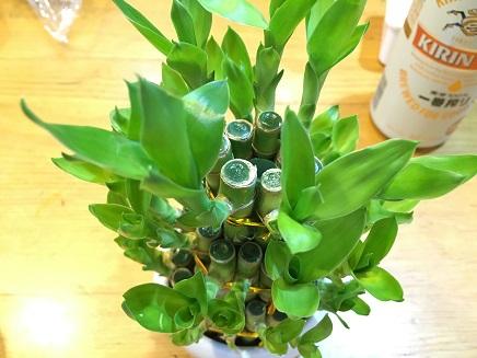 9192016 BambooS
