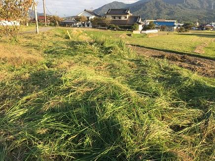 10292016 草刈りS1