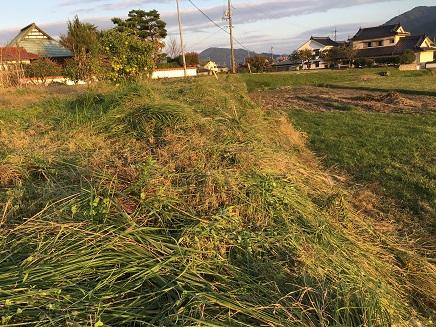 10292016 草刈りS2