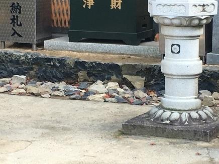 12092016 79番天皇寺大師堂の前S4