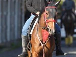 【悲報】ジェンティルドンナの全妹ベルダム石坂師「駄馬です」