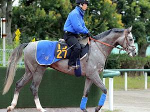 フォギーナイト(2億3000万の金子馬)、11/12東京6Rでデビュー