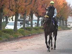 【ジャパンカップ】キタサンブラック清水師「いや、本物になるのは来年。凄い馬になる」