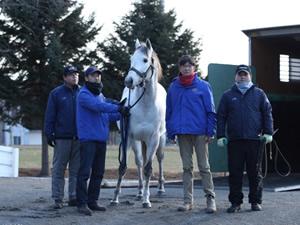 【悲報】キャプテントゥーレ種牡馬引退