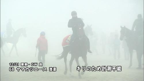 2016年 有馬記念 ヤマカツエース 追い切り