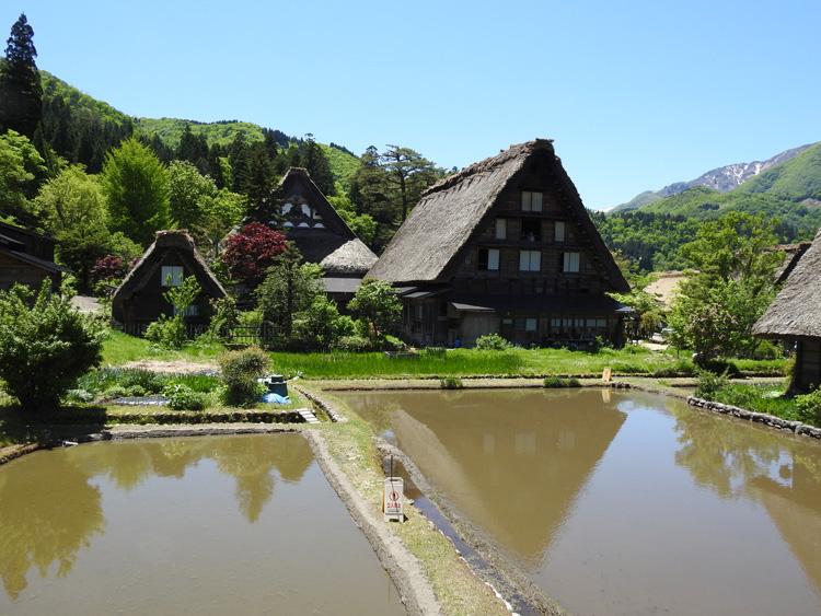 田んぼの水面に新緑と合掌造りが映る絶景のロケーション 白川郷 ①