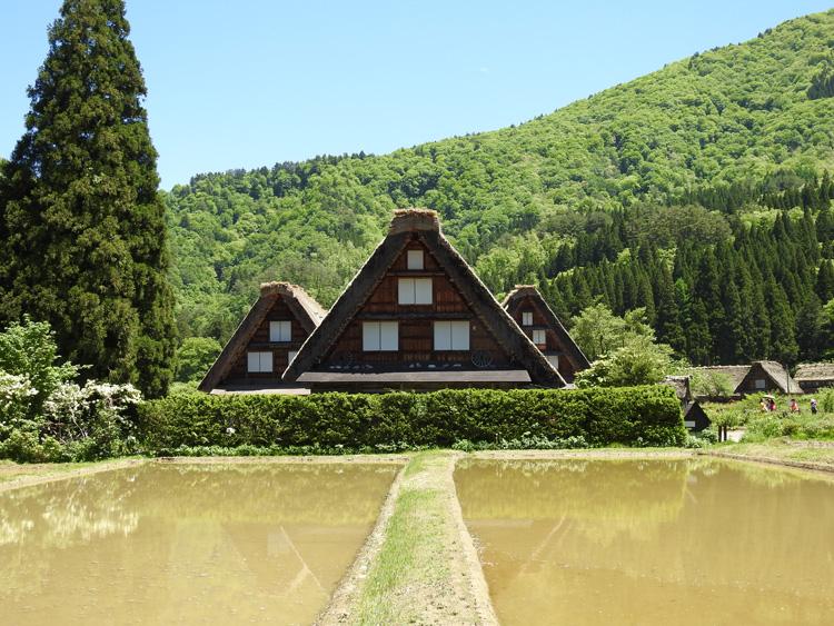 田んぼの水面に新緑と合掌造りが映る絶景のロケーション 白川郷 ④