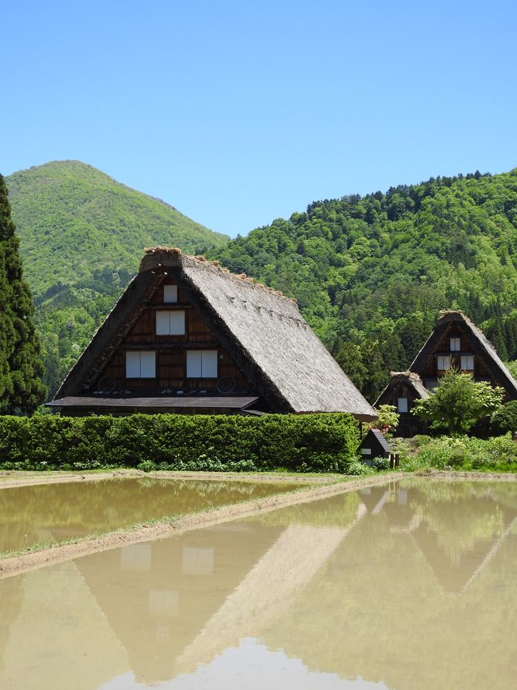 田んぼの水面に新緑と合掌造りが映る絶景のロケーション 白川郷 ⑤
