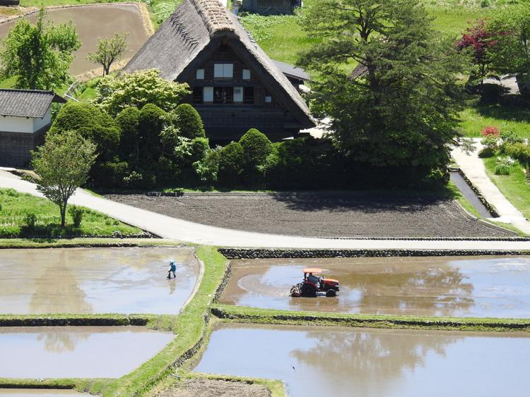 田んぼの水面に新緑と合掌造りが映る絶景のロケーション 白川郷 ⑦
