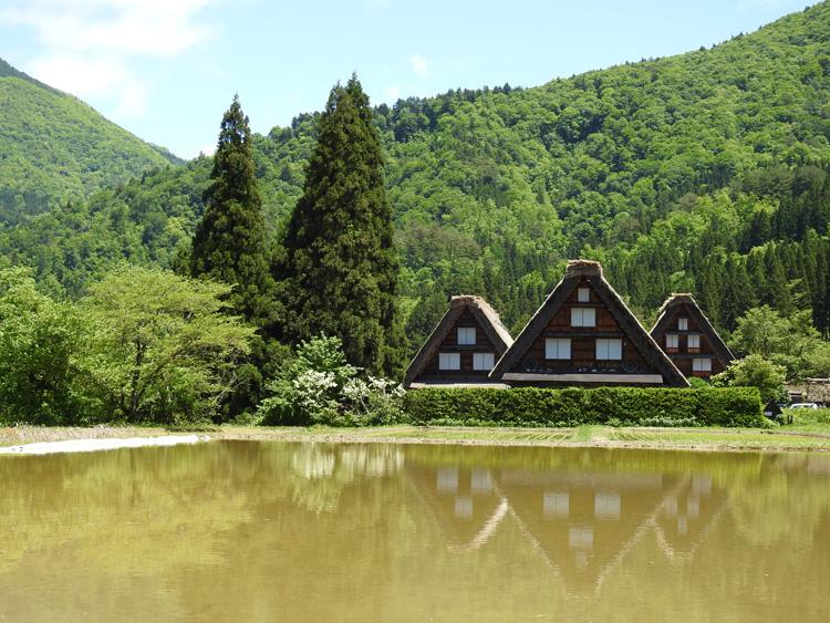 田んぼに水が張られる新緑の時期限定の風景を楽しもう! 白川郷 ①