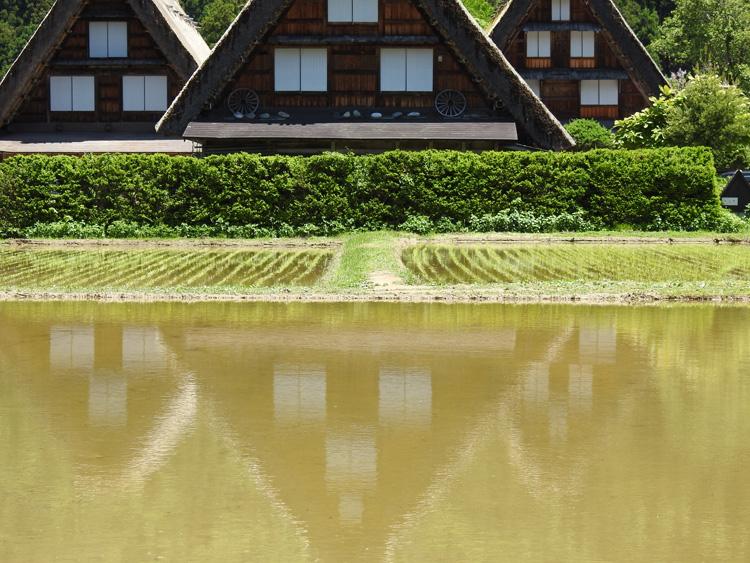 田んぼに水が張られる新緑の時期限定の風景を楽しもう! 白川郷 ②