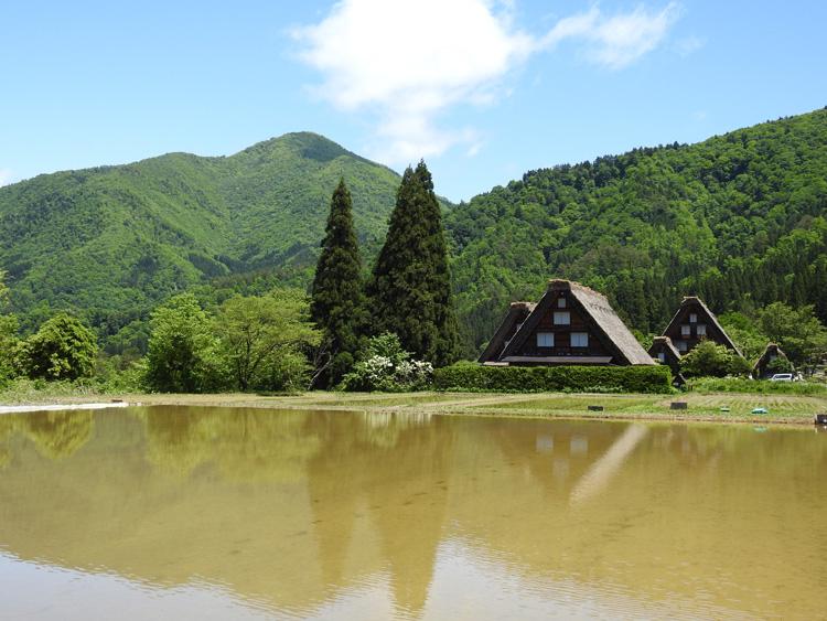 田んぼに水が張られる新緑の時期限定の風景を楽しもう! 白川郷 ③