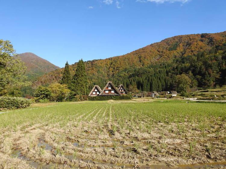 白川郷 秋の紅葉。 冬の静寂。 四季折々の彩りと故郷の懐かしい風景にとても癒やされます①