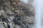 噴泉とサル