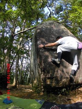 ティータイム岩メンマT巣