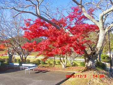 紅葉20161202