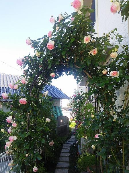 バラの園1