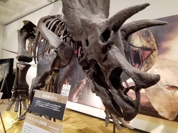 大恐竜展3