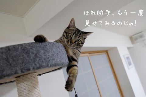 ★DSCF0185 (1絵)thum