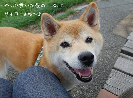 ☆DSC04979 (2E)thum