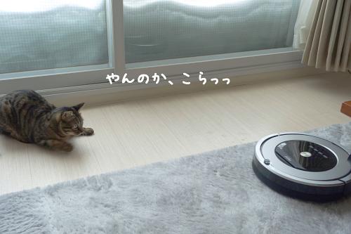 ☆DSC06417 (2E)thum