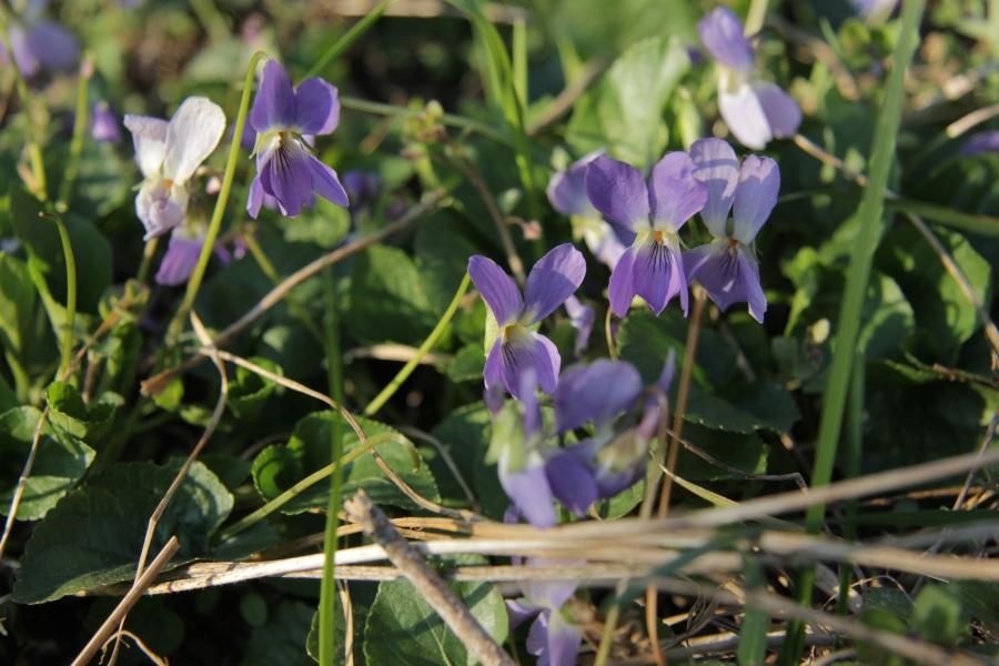 tavaszi enek (8)